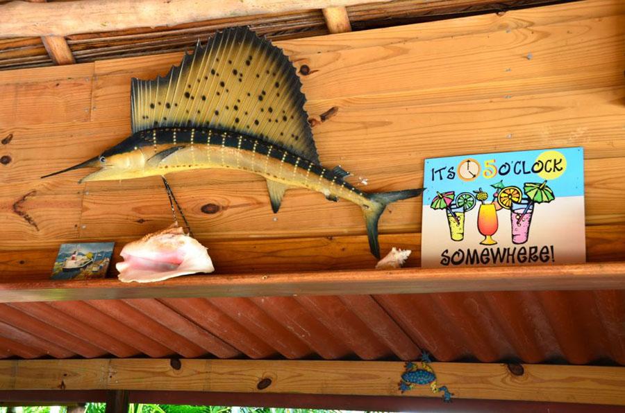 GARDEN OF EDEN Bocas Del Toro Bocas7