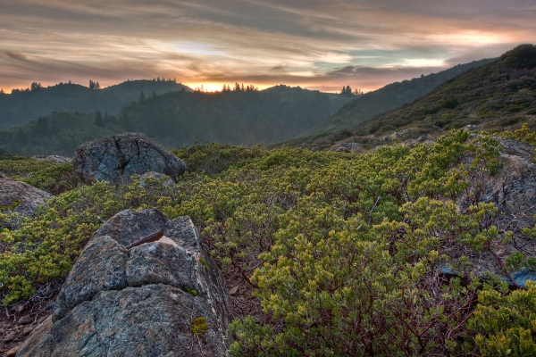 pine-mountain-ridge-trail-in-fairfax-california-at-sunset89252F2D-DD96-7FEE-1DD8-07B4683442DF.jpg
